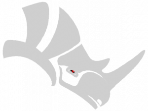rhinohead620-bis